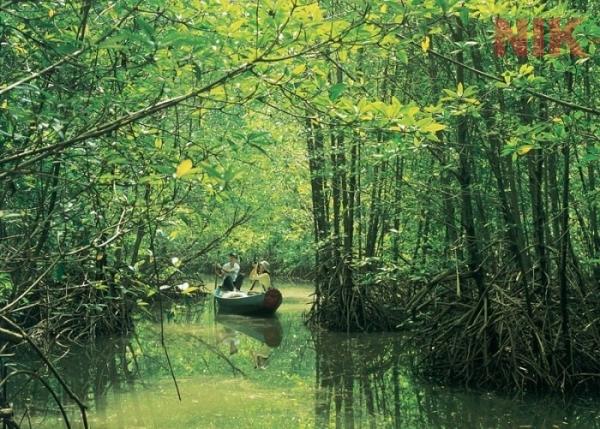 Du lịch sinh thái tại Cần Giờ