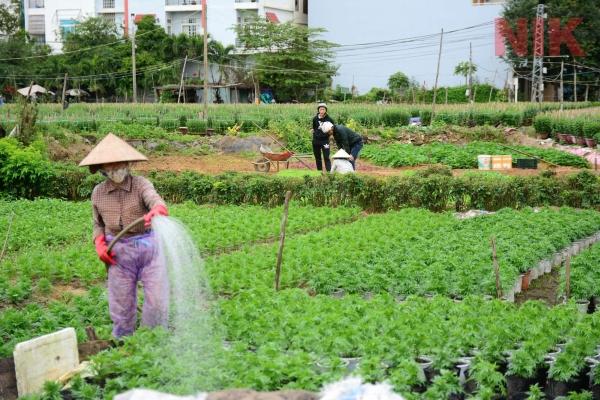 Mua bán đất nông nghiệp cần phải thực hiện theo cần phải thực hiện theo đúng trình tự mà pháp luật quy định tự mà pháp luật quy định