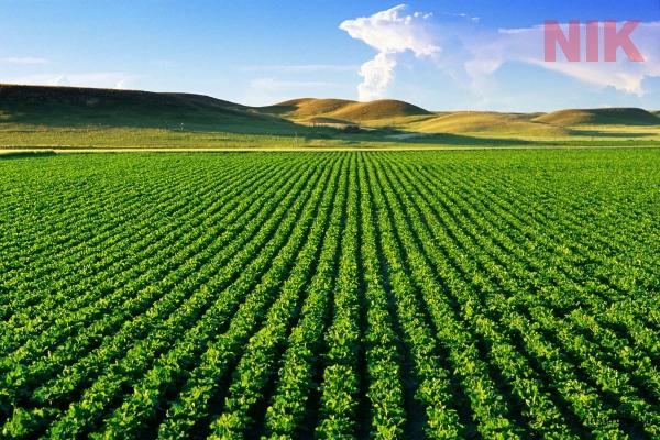 Thuế sử dụng đất nông nghiệp là thuế gián thu